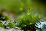 Mosses and Lichens