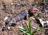 Fauna of the Bibbulmun Track