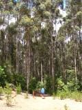 Pb200055.jpg