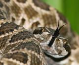 Reptiles & Amphibians of Southern California