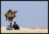 Camel break time!
