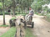 Sumatra Cart and Driver
