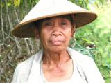 Sumatran Taro farmer