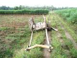 Sumatran Cart