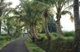 Balinese Snake road