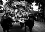 Bangladesh (18).TIF