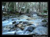 creek02_6701.jpg