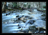 creek03_6703.jpg