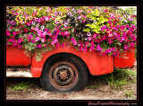 flower_truck01_5780.jpg