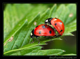 lady_bugs02_3085.jpg