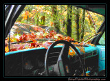 abandoned_car_8484.jpg