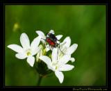 makin_bugs01_3883.jpg