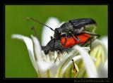 makin_bugs02_3893.jpg