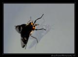 fly01_4446.jpg