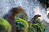 100-Fountains.jpg