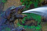 Dragon-Fountain.jpg