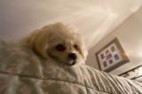Dream-Dog.jpg