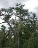 2611 Tree.jpg