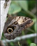 5859 Owl species