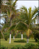 6120 Palms at Park Royal Cancun.jpg