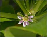 6211 Flower id.jpg