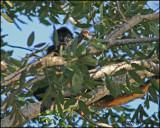 6413 Yucatan Spider Monkey.jpg