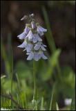 6818 Wildflower id unknown