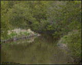6939 Green Stream.jpg