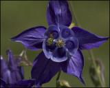 Florals 2007