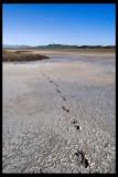 Salt flat, Mt Stuart in background 12 x 18 300 dpi from DNG R0010171