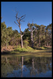 Trees and waterhole, Townsville town common 12 x 18 300 dpi from DNG R0010147