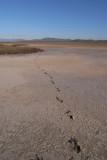 Salt flat, Mt Stuart in background original from camera R0010171.JPG