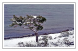 A árvore, o canal e a neve