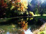 Autumn's Dancing Sunlight ~ Thursday Challenge.