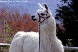 Llama Modeling!