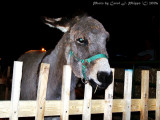 'Lil Donkey.