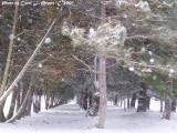 Madison Winter Winds!