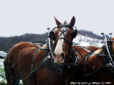 Working Draft Horse Team WV.
