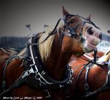Working Draft Horse WV.