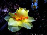 Ednas Spring Flowers.jpg
