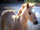 Keonie, new Filly!