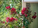 Lanthier Garden.