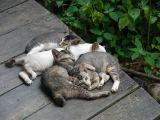 Kuching Wildlife