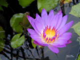 Water Flora