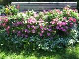 Swenson's Garden & Nursery