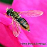 Scarab Bee