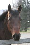 Robin's Horse Alternate