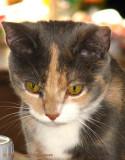 Kitty Josie