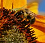 Sugar crystals and honey bee
