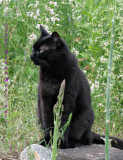 Kitty Mickey with Asparagus